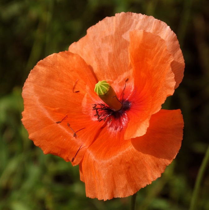 Ninety years of Remembrance and poppies…
