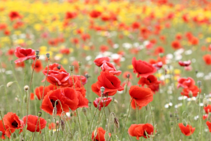 What is Armistice Day?