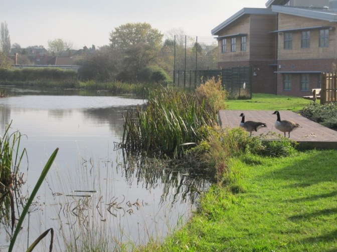 Canada geese at the Stan Ball Centre by founder member Roger Jones.