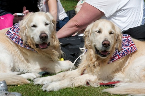 These patriotic pooches in the park know what's best - fun in the sun in Bloxwich