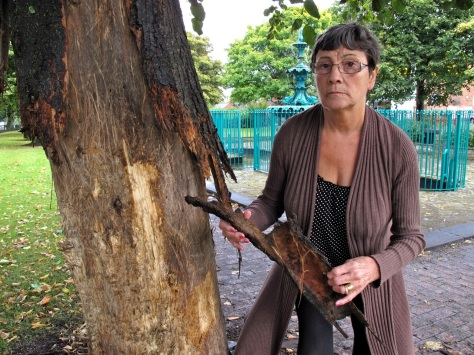 Cllr Kath Philips examines a vandalised tree.