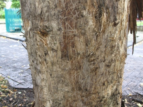 The most badly damaged tree is covered with apparent bite-marks.