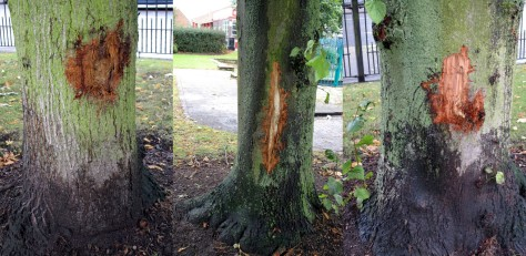 Several other trees have also been attacked.