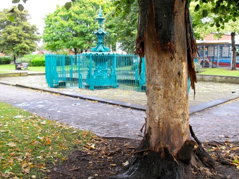 Appalling tree damage in Bloxwich Promenade Gardens