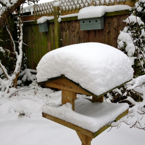 Snowy bird table (Stuart WIlliams)