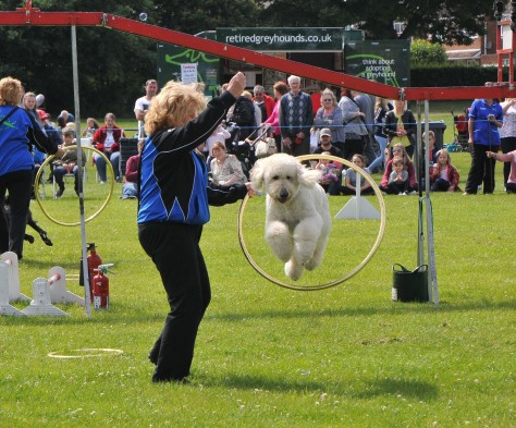 Beware of the flying poodle!