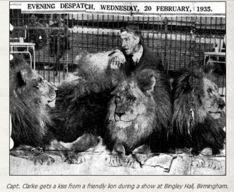 Captain Clarke the Leamore Lion Tamer at Bingley Hall just a few years later