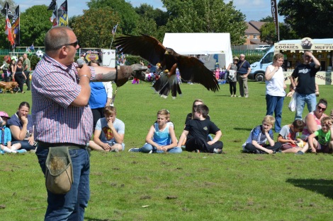 Falconry par excellence from Head Falconer Phillip Gibbons of Ridgeside Falconry and Lurcher Racing