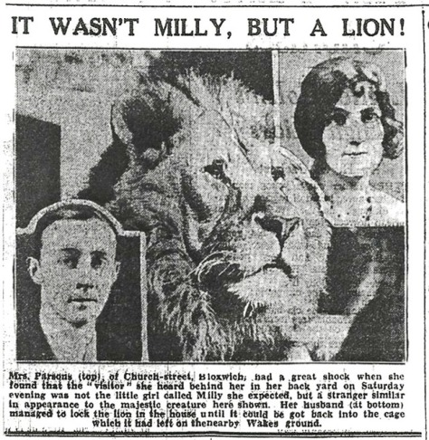 The true story of the legendary Bloxwich Lion will be revealed in The Bloxwich Telegraph tonight!