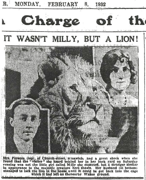 The Bloxwich Lion which escaped into Church St, Express & Star 8th February 1932